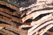 amorim-cork-factory-visit-designboom-004-818x545